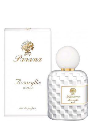 Amaryllis Bianco Panama 1924