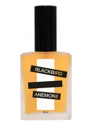 Anemone Blackbird