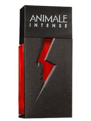Animale Intense Animale