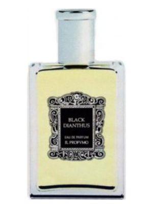 Black Dianthus Il Profvmo