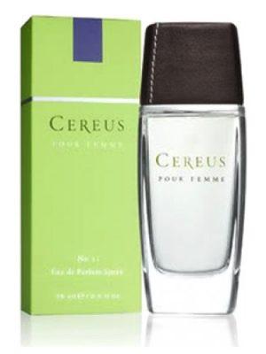 Cereus No.12 Cereus