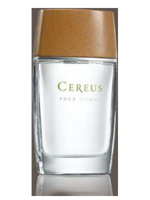 Cereus No.4 Cereus