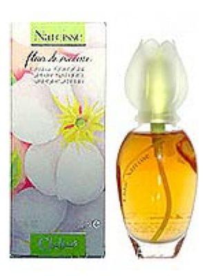 Fleur de Narcisse Chloé