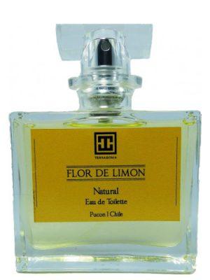 Flor de Limon Terragonia