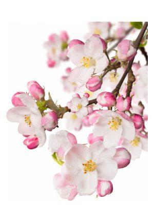 Japanese Garden CVS Essence of Beauty CVS Essence of Beauty