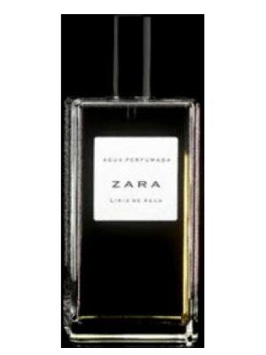 Lirio de Agua Zara