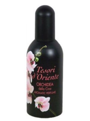 Orchidea della Cina Tesori d'Oriente