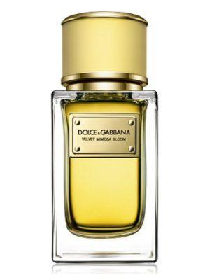 Velvet Mimosa Bloom Dolce&Gabbana