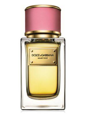 Velvet Rose Dolce&Gabbana